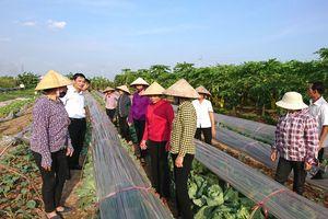 Hà Đông: Mô hình sản xuất rau trái vụ thu nhập hàng trăm triệu đồng mỗi héc-ta/năm