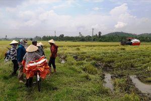 Vụ bảo kê máy gặt tại Hà Tĩnh: Bí thư Huyện ủy chỉ đạo công an vào cuộc