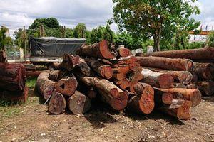 Vụ trùm gỗ lậu Phượng 'râu': Không kỷ luật lãnh đạo Bộ đội Biên phòng Đắk Lắk