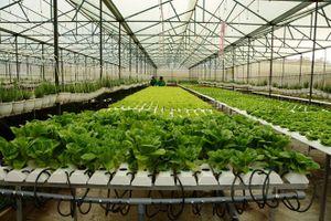 'Công nghệ 4.0' cơ hội và thách thức cho nông nghiệp Việt Nam