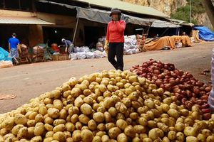 Đường đi của nông sản Trung Quốc 'đội lốt' Đà Lạt: Bùa hợp thức hóa