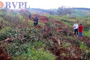 Kiến nghị chuyển Cơ quan điều tra vụ Công ty Long Sơn để xảy ra hàng loạt sai phạm nghiêm trọng