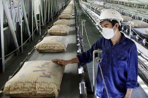 Kinh doanh gặp khó, Vicem vẫn tăng vốn tại Xi măng Hạ Long
