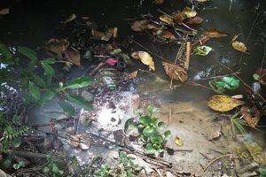 Thừa Thiên - Huế: Kênh Hói Tre ô nhiễm nặng, dân 'nín thở' chịu đựng mùi hôi thối