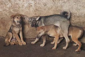 Hà Nội dự kiến cấm bán thịt chó ở các quận từ 2021