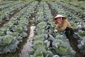 Vĩnh Phúc: Xây dựng nông thôn mới Định Trung