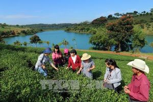 Du lịch canh nông tạo đột phá tăng trưởng ngành du lịch Lâm Đồng trong xu thế hội nhập quốc tế