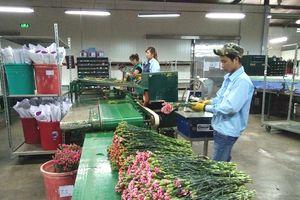 Đẩy mạnh triển khai kế hoạch đào tạo nghề nông nghiệp cho lao động nông thôn