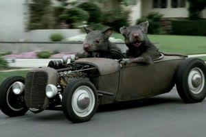 Những mẹo nhỏ chống chuột làm tổ trong ô tô