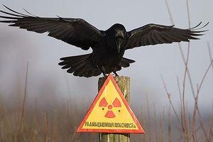 Cuộc sống của động vật hoang dã bên trong 'vùng đất chết' Chernobyl
