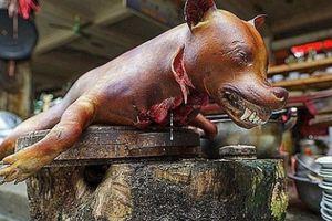 Ăn thịt chó: Sướng mồm hại thân, ôm bệnh vào người