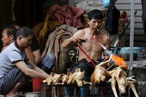 Những nguy hiểm rình rập sức khỏe khi ăn thịt chó