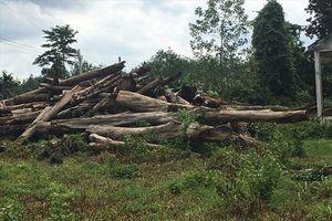 Bình Phước lập đoàn xác minh việc giao đất, giao rừng tại dự án Sasco