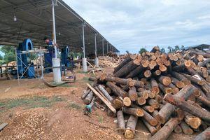 Hà Tĩnh: Xưởng cưa hoạt động trái phép trong trại giam Xuân Hà