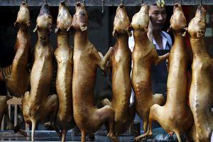 Ngoài Việt Nam, còn những nước nào trên thế giới ăn thịt chó?