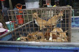 Hạ viện Mỹ thông qua luật phạt tiền 5.000 USD nếu ăn thịt chó, mèo