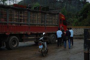Hải quan tăng cường kiểm soát, ngăn chặn dịch tả lợn Châu Phi từ cửa khẩu