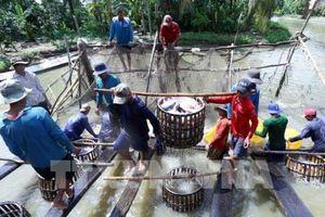 Xuất khẩu nông, thủy hải sản sang thị trường Nhật Bản vẫn gặp khó