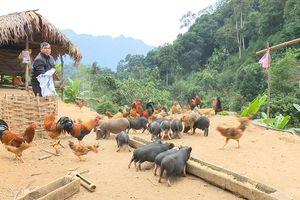 Tuyên Quang: Nhiều giải pháp giảm nghèo ở các xã có tỷ lệ nghèo cao