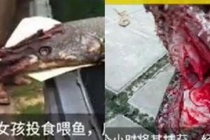 Tóm gọn 'thủy quái' kỳ dị cắn chảy máu bé gái Trung Quốc
