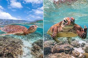 Rùa biển cực ngầu, giơ ngón tay thối về nhiếp ảnh gia chỉ vì...