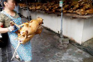 Man rợ lễ hội tàn sát 10.000 con chó mỗi năm ở Trung Quốc