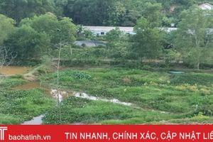 Sớm xử lý dứt điểm trại chăn nuôi gây ô nhiễm môi trường ở Vũ Quang
