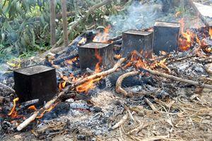Thưởng thức món chuột nướng thùng tại đồng ruộng miền Tây
