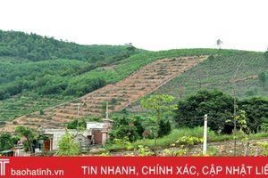 Hơn 4.500 ha đất lâm nghiệp bị xâm lấn trồng cây ăn quả: Vỡ quy hoạch!