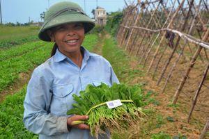 Sản xuất rau hữu cơ thời 4.0 tại Hà Tĩnh