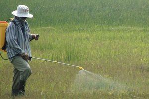 Loại bỏ nhiều thuốc diệt cỏ có thành phần gây ung thư