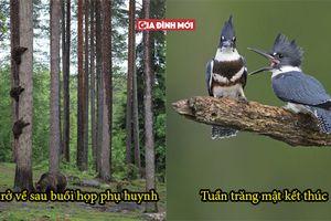 30 bức ảnh ngẫu nhiên của động vật hoang dã không hề Photoshop khiến bạn không rời mắt