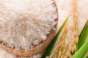 Công nghệ sấy gạo của Việt Nam chuyển giao cho Myanmar đạt giải nhất Hult Prize