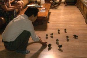 Người đàn ông coi 21 con vịt như con mình
