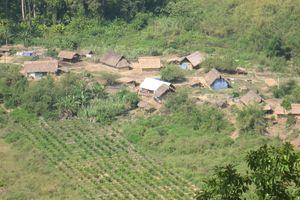 Sắp xếp, ổn định dân di cư tự do tại Lâm Đồng