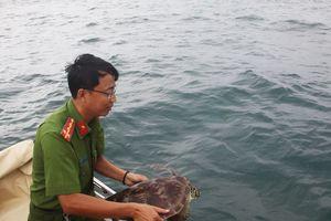 Giải cứu, thả 12 cá thể rùa biển về môi trường tự nhiên