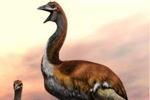 Đã có lời giải cho sự biến mất của loài chim lớn nhất thế giới