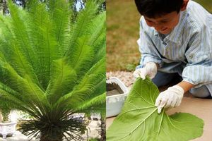 Cảnh báo: 6 loại cây cảnh có độc tố gây hại cho trẻ em, cha mẹ cần hết sức cẩn thận