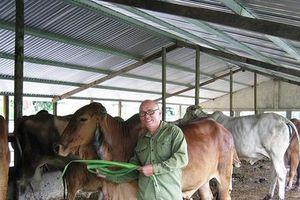 Câu chuyện khởi nghiệp của những tỷ phú nông dân nhờ nuôi bò