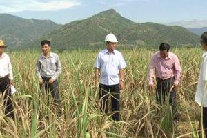 Ninh Thuận: Hàng chục hồ nước cạn trơ đáy