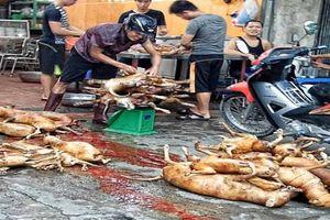 Những cái chết lạ kỳ, kinh hoàng ở ngôi làng mổ chó lớn nhất nước
