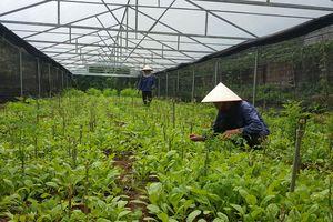 Đồng hành với doanh nghiệp đầu tư vào nông nghiệp