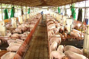 C.P Việt Nam hỗ trợ hóa chất, kit test chẩn đoán, kiểm tra bệnh dịch tả lợn Châu Phi