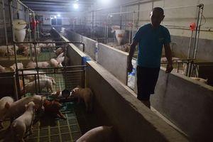 Dịch cúm lợn Trung Quốc sẽ tác động xấu đến chuỗi cung ứng toàn cầu như thế nào?