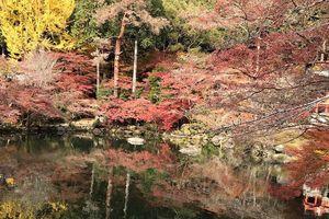 Mùa thu lá đỏ ở Nhật Bản đẹp đến ngẩn ngơ lòng người