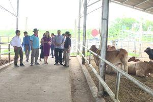 Huyện Phú Xuyên phấn đấu hoàn thiện các tiêu chí đạt chuẩn NTM