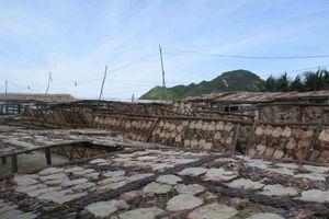 Bình Định: Ô nhiễm môi trường từ nghề sơ chế mực xà