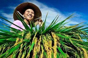  Kết quả tích cực về tín dụng chính sách trong lĩnh vực nông nghiệp, nông thôn