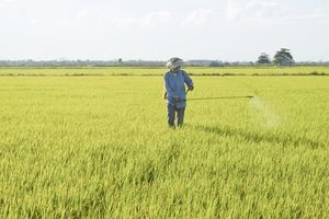 Thuốc bảo vệ thực vật: Sẽ bị loại bỏ nếu chứa hóa chất độc hại