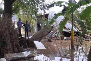 Cây ngã đè sập nhà, mẹ và con trai 3 tuổi tử vong